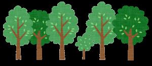 林 並木 樹木