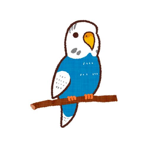青いセキセイインコ