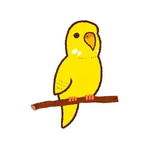 黄色いセキセイインコ